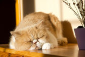 Cute cat — Stockfoto
