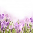 Spring meadow — Stock Photo #7683094