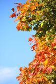 Abstact otoño — Foto de Stock