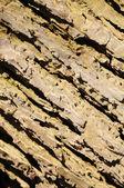 Abstract tree crust texture — Stock Photo