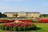 Sconbrunn sarayı, viyana — Stok fotoğraf
