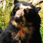 Bear at zoo — Stock Photo #6943392