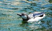 企鹅 — 图库照片