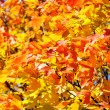 Autumn leafs background — Stock Photo