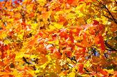 Outono folhas fundo — Fotografia Stock