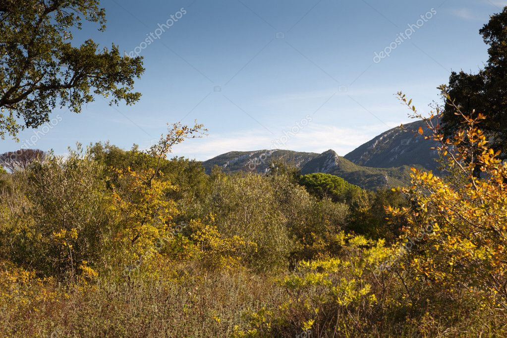 The mountain autumn landscape with colorful forest. — Stock Photo #7665160