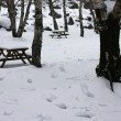 Stock Photo: Snow covered wooden benches