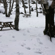 Snow covered wooden benches — Stock Photo