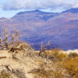 Dry Dead Trees Mesquite Flat Dunes Grapevine Mountains Death Val — Stock Photo #7604114