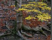 Root of tree — Stock Photo
