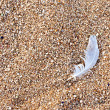 Bird feather on the beach sand — Stock Photo
