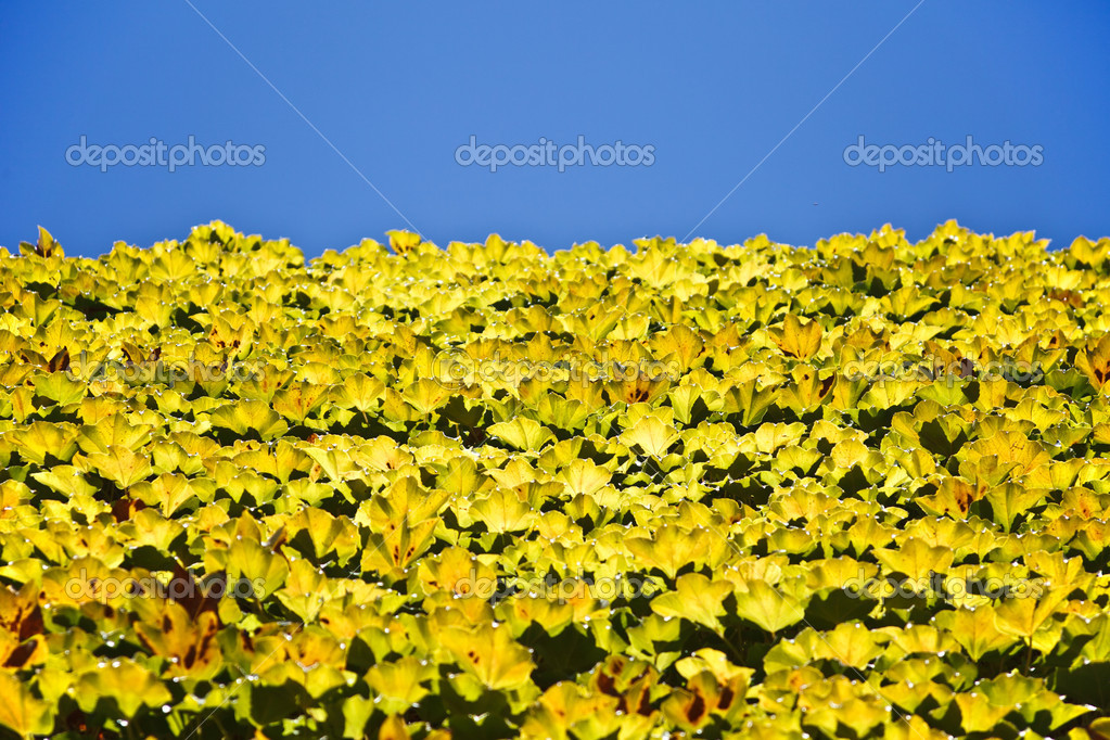 Green and yellow leaves and sky, background — Stock Photo #7008401