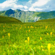 Mountain panorama with edelweiss — Stock Photo