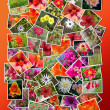 Royalty-Free Stock Photo: Collage of beautiful blossoming flowers