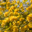 Background with yellow flowers — Stock Photo