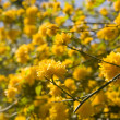 Stock Photo: Background with yellow flowers