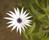 Exotic delicate flower in Tunisian garden — Stock Photo