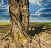 Tree trunk and clouds — Stock Photo