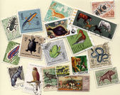 Stamps with different animals — Stock Photo