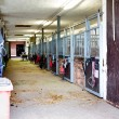 Stock Photo: Horse stable