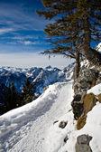 Alps in winter — Stock Photo