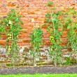 Tomato plants — Stock Photo
