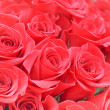 Red roses — Stock Photo #6881662