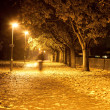 Stock Photo: Path at night