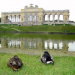 Two ducks by the Gloriette — Stock Photo