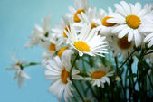 Bunch of white flowers — Stock Photo