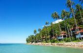 Kumsaldaki palmiye ağaçları ile güzel bir ev — Stok fotoğraf