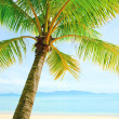 Stock Photo: Beautiful beach with palm tree over sand