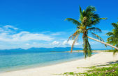 Tropical beach - vacation background — Stock Photo