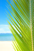 Beautiful beach with palm tree over the sand — Stock Photo