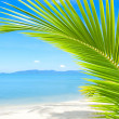 Beautiful beach with palm tree over sand — Stock Photo #7315258