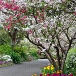Spring Garden — Stock Photo #7726751