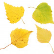 Autumn birch leaves — Stock Photo #6939779