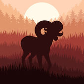 Mountain sheep in wild nature landscape illustration — Stock Vector