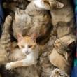 Many Cats — Stock Photo #7673281
