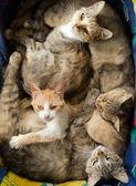 Many Cats — Stock Photo