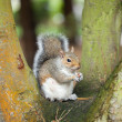 Stock Photo: Squirrel in tree