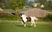 Trotting Horse — Stock Photo