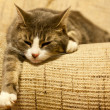 Cat on Settee — Stock Photo