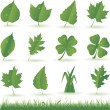 Green leaf set - Stock Vector