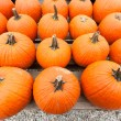 Pumpkins at the farmer market. - Stock Photo