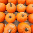 Pumpkins at the farmer market. — Stock Photo