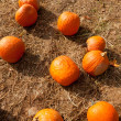Pumpkin patch at farm. — 图库照片 #7237049