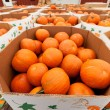 Pumpkins at farmer market. — Foto Stock #7237235