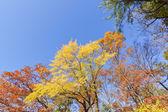Fall Scenery. — Stock Photo