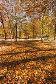 Scenario di autunno. — Foto Stock